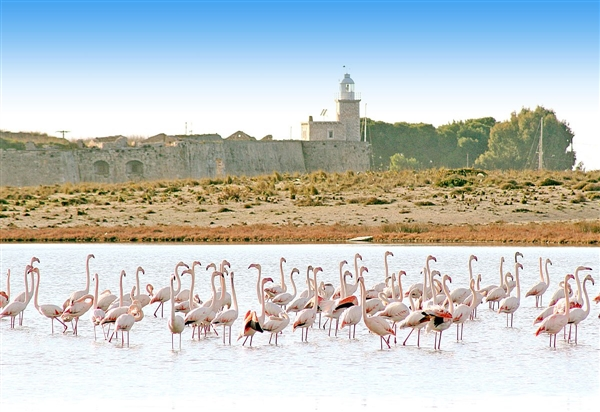 flamingos in Lefkada
